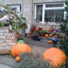Neighbourhood Seasonal Display