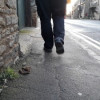 Fines are no deterrent for dog owners