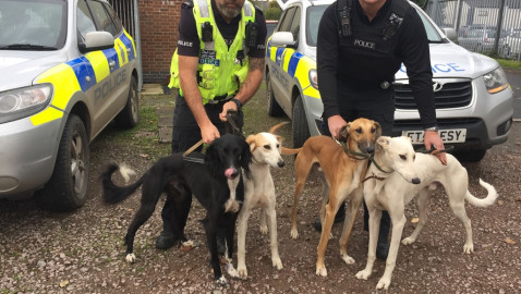 Hare coursing continues to blight the countryside